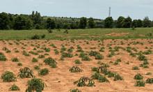 Cần bán 2ha đất nông nghiệp Bình Thuận tiềm năng tăng trưởng