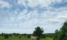 Cần ra gấp lô đất nông nghiệp Bình Thuận tiềm năng tăng trưởng