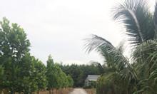 Bán đất khu công nghiệp Phước Đông
