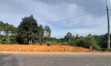 Chính chủ bán 3000m2 sổ riêng, mặt đường Phước Bình gần quốc lộ 51