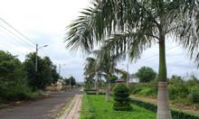Bán đất 100% thổ cư trung tâm hành chính huyện Cư Kuin, Đắk Lắk