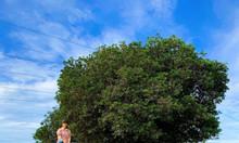 Bán nhanh 2hecta đất vườn Nam Á Garden giá chỉ 50 nghìn/m2, sổ có sẵn