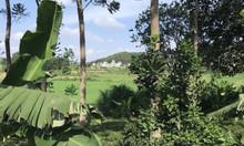 Bán đất tại Xã Yên Bình Thạch Thất Hà Nội 500m2