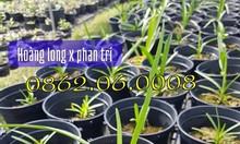 Lan kiếm Hoàng Long x Phan Trí | LH: 0862.060.008