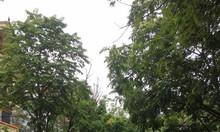 Bán nhà mặt phố Phạm Thận Duật, Mai Dịch, Cầu giấy