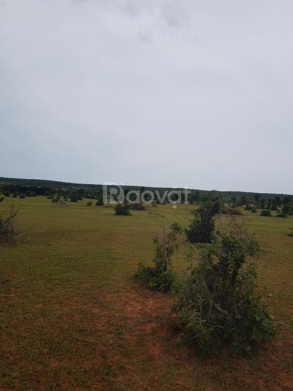Bán 10124m2 đất nông nghiệp Hồng Thái sổ sẵn 506tr