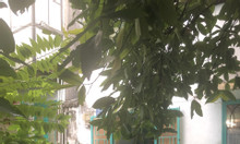 Chính chủ bán nhà trong hẻm đường Trần Bình Trọng, F1, Q.Gò Vấp