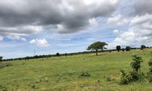Bình Thuận đất nông nghiệp tăng trưởng cùng những dự án của nhà nước