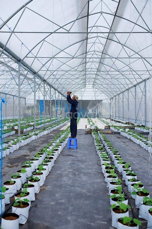 Màng nhà kính Israel, màng nhà kính nông nghiệp,màng phủ nhà kính
