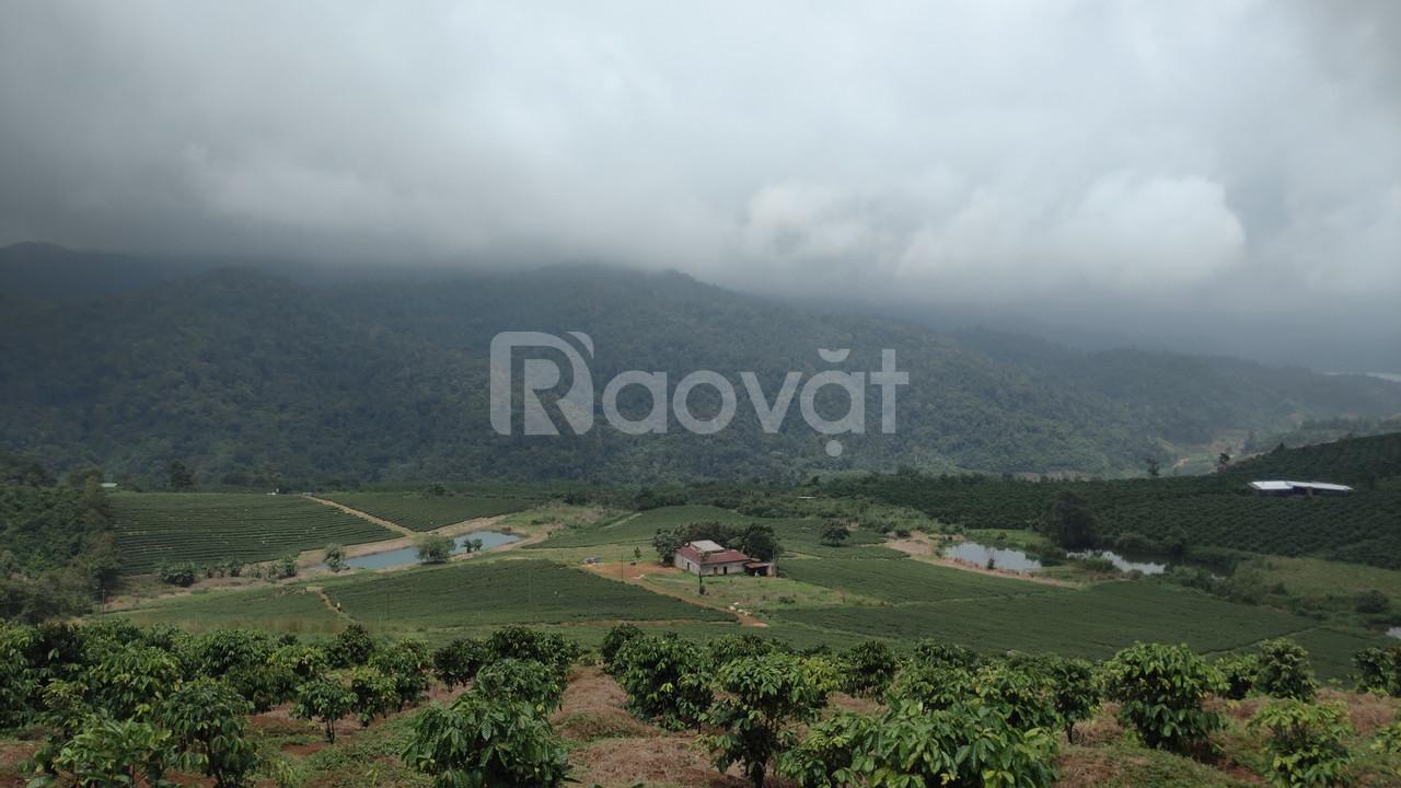 Săn đất tại xứ lạnh Bảo Lộc
