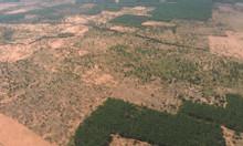 Bán 5000m2 đât Bình Thuận gần biễn giá 350 triệu có sổ đỏ