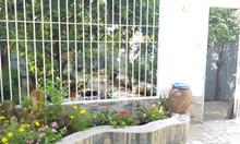 Chính chủ cần bán biệt thự sân vườn KDC Savimex, phường Phú Thuận, Q7