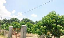 Bán đất Suối Tân, ngay khu công nghiệp Suối Dầu