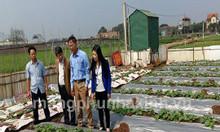 Màng phủ nông nghiệp, màng phủ luống, màng phủ đất