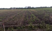 Bán 265m2 đất vườn tại Long An giá 1 tỷ 299 có bớt + hoa hồng
