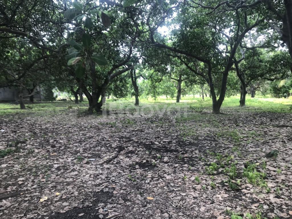 Bán vườn Đồng Nai 2,4 ha ngay khu du lịch núi Chứa Chan - Gia Lào