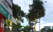 CC bán lô đất nằm ngay trên trục đường chính CMT8, Tp Bà Rịa, giá rẻ.