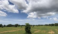 Bán 3000m2 đất vườn Bình Thuận giá 150 triệu, bao mọi chi phí