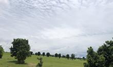 Bán 1000m2 đất vườn Bình Thuận giá 50 triệu, bao mọi phí