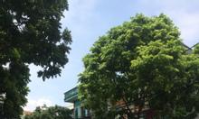 Cần bán gấp nhà mặt phố Vân Nội, Đông Anh