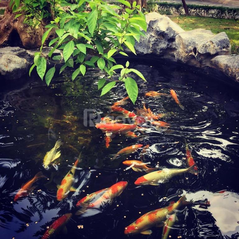 Bán villa Vườn Mai 350m2 khu đô thị Ecopark