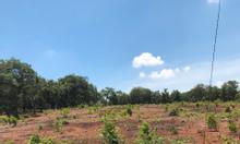 Bán thửa đất 4825 m2 mặt tiền xã Phước Bình, Long Thành