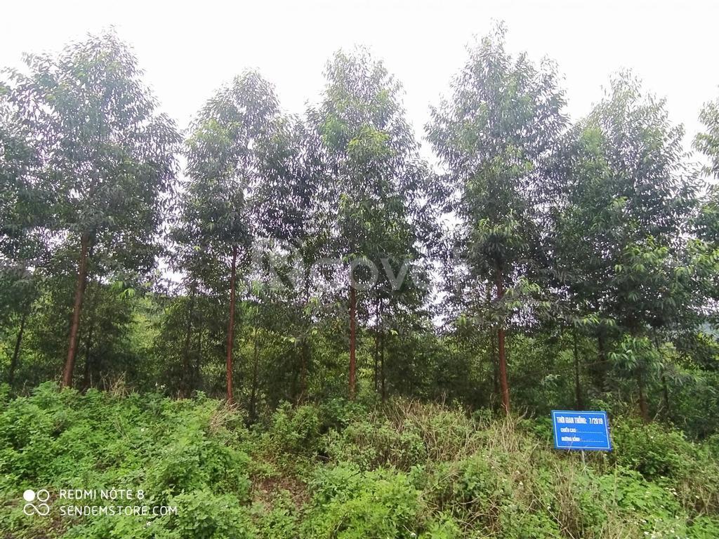 Đất rừng sản xuất tại Lạng Sơn