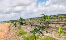 500m2 đất vườn có sổ tại Củ Chi