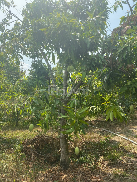 Bán 2188m2 đất trồng cây lâu năm