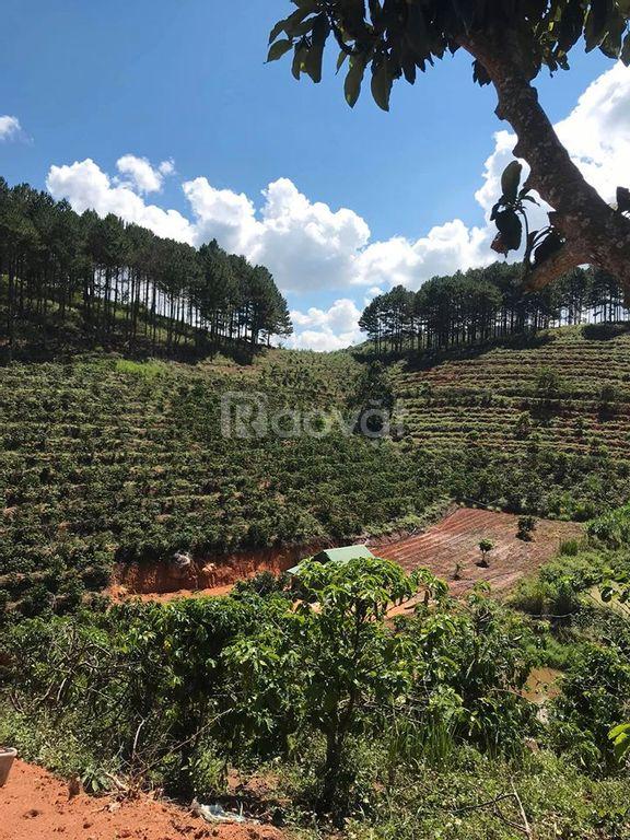 Bán đất nông nghiệp Lạc Dương Lâm Đồng