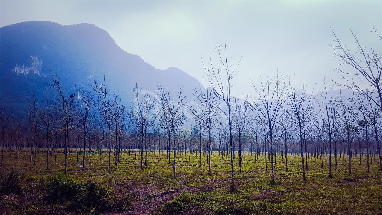 220ha đất làm du lịch sinh thái, nghỉ dưỡng cần bán tại bản mới