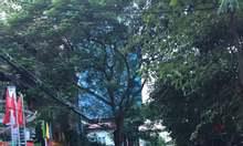 Nhà ngõ 4 Kim Đồng, Hoàng Mai, 120m2, mặt tiền 5m, ô tô tránh