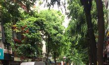Bán đất mặt tiền phố Lò Đúc, Quận Hai Bà Trưng