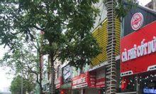 Bán nhà mặt phố Ngọc Hà, 42m2, 5 tầng