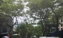 Bán tòa nhà văn phòng Trần Thái Tông. Cầu Giấy