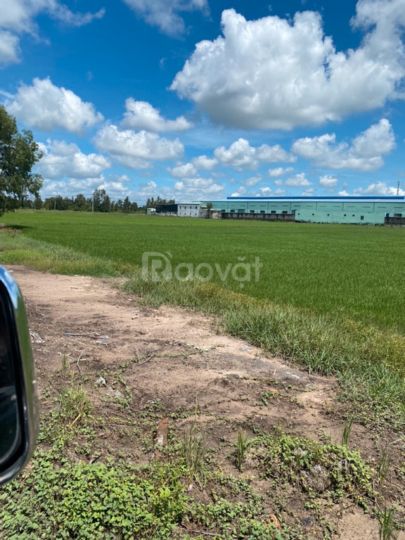 Chính chủ bán 1300m2 đất vườn ở xã Phước Thạnh, Củ Chi