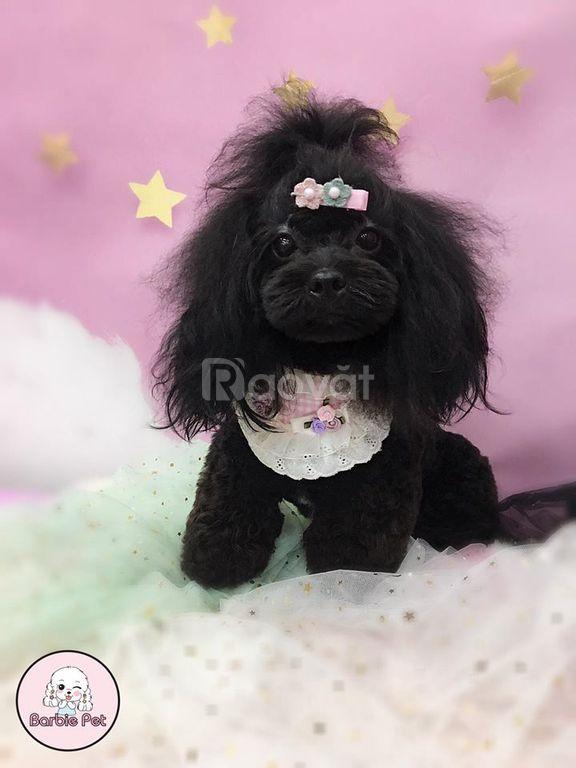 Cắt tỉa lông chó mèo, spa làm đẹp cho thú cưng Barbie Pet