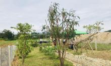 Bán lô đất xã Diên Đồng, Nha Trang
