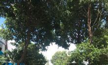 Cho thuê biệt thự Hưng Thái, Phú Mỹ Hưng, Q7