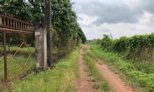 Đất trồng cây giá rẻ, 1000m2 cách quốc lộ 1,5km