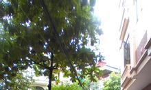 View vườn hoa đẹp, bán nhà phân lô Lương Thế Vinh Thanh Xuân 50m2x4T ô tô đỗ cửa, dân trí cao