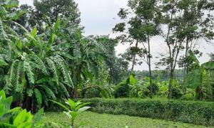 Bán vườn trái cây 6100m2 có đủ các loại cây, có sẵn nhà, ao, suối tại xã Bàu Chinh, Châu Đức, BRVT