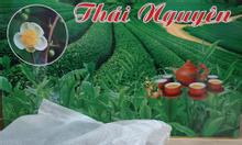 Trà Thái Nguyên túi lọc