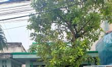 Chính chủ cho thuê hẻm xe hơi, giá tốt đường số 10 Tăng Nhơn Phú B, Q9