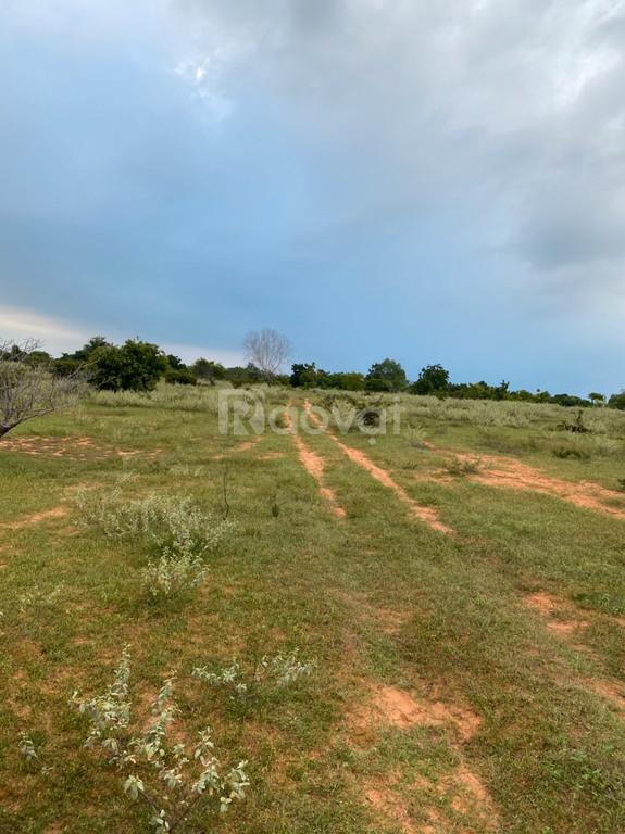 Bán đất nông nghiệp Hồng Thái gần đường xuống biển và KDL Bàu Trắng