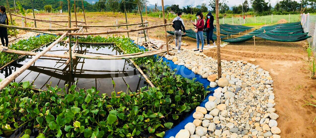 Đất xã Diên Đồng, gần cao tốc Bắc Nam