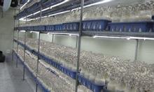 Lắp đặt kho lạnh trữ nấm ở Đà Lạt tại ANKACO