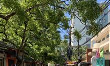 Bán nhà phố Bạch Mai ngõ ôtô