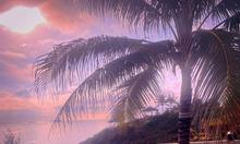 Đón nắng nạp vitamin C, cùng Aurora Villa & Resort Quy Nhơn