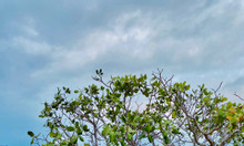 Đất cách biển Bình Thuận 1.5km tiềm năng khai thác du lịch biển